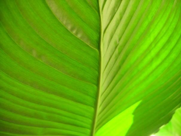 Stress hydrique, production végétale et OGM dans -> ACTUS image00119