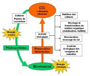 Transfert d'énergie dans l'écosystème sol