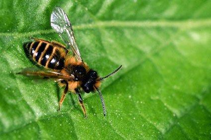 Suivez les abeilles...suite dans -> ACTUS abeille3