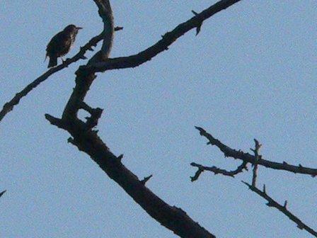 birdcircle