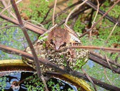 Sur le web: de la mort de l'environnement et autres rencontres dans Biodiversité frog
