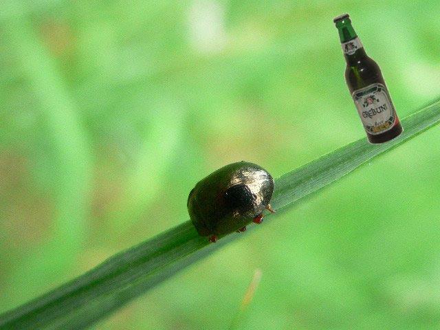 scarabesurbrindherbe2 dans Bateson