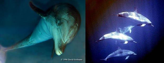 dolphin2 dans Bateson