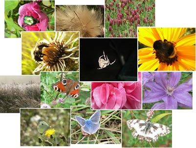 Petite écologie d'un insecte urbain