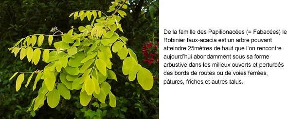 L'élément N et le végétal (4) dans Biodiversité image0013