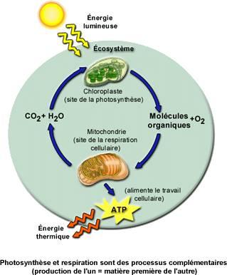 L'élément N et le végétal (1) dans -> NOTIONS D'ECOLOGIE image002