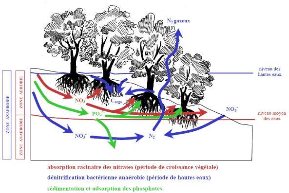 image0042 dans Monde végétal